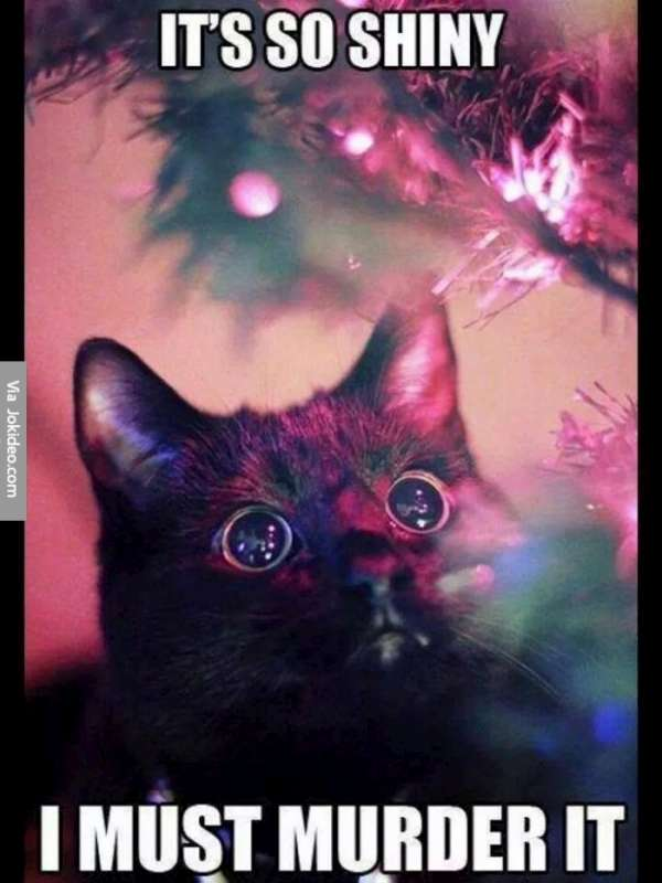 Funny pictures of cats in christmas trees